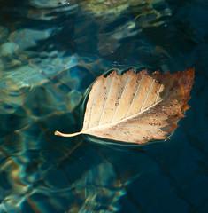 boat said max (ksuwildkat) Tags: water delete2 leaf drops delete save tamron tamronspaf1750mmxrf28diiild