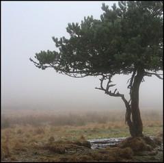 dana hilliot - la voie de l'hiver