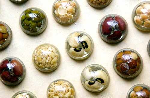 vinatage seed and bean resin buttons