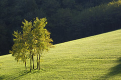 Transverse light (Enrijo) Tags: light italy tree green nature del nikon colours welcome grappa veneto d60 criticism bassanodelgrappa 1685 colorphotoaward