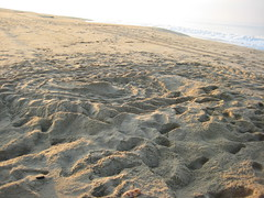 leatherback seaturtle nest (ABC Dolphin Trainer Academy) Tags: mexico seaturtle puertoescondido leatherbackseaturtle seaturtlerelease seaturtlehatchery seaturtlenesting