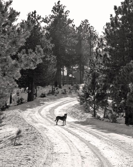 A dog waits patiently for a walk on a snow covered mountain road.