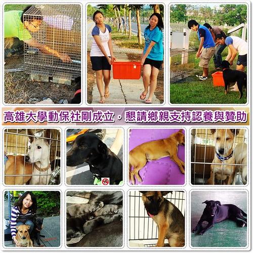 20091228「認養與贊助」高雄大學動物保護社剛成立,懇請鄉親支持認養與贊助