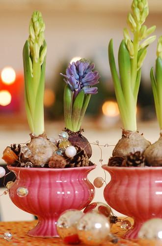 Hyacinthes by jasna.janekovic.