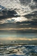 weekNINETEEN (Csutkaa) Tags: winter sky lake cold reflection ice clouds duck hungary explore balaton g t forzen kacsa felhk tl tkrzds explored befagyott