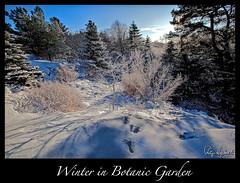Winter in Botanic Garden (Filip Nystedt) Tags: winter snow göteborg europa sweden gothenburg skandinavien sverige scandinavia westcoast hdr twop västkusten greatphotographers canon5dmarkii canonzoomlensef1635mm28liiusm