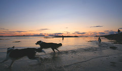 Sunset Beach Dogs.... (Hugh Spicer) Tags: sunset summer beach dogs scotland september rum 2008 muck canna arisaig morar eigg smallisles