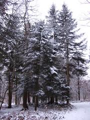 im Wildenloh Winter 2010 (feuermelder2009) Tags: winter 2010 ammerland wildenloh