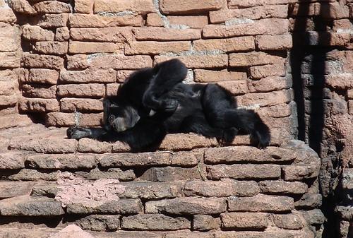 lounge monkey