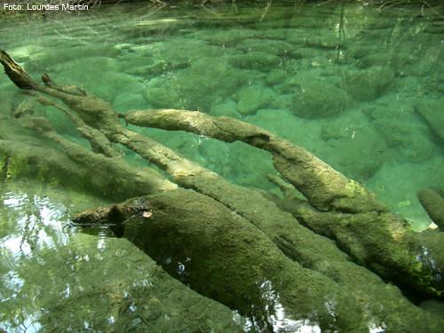 Detalle del celeste fondo del río Urederra