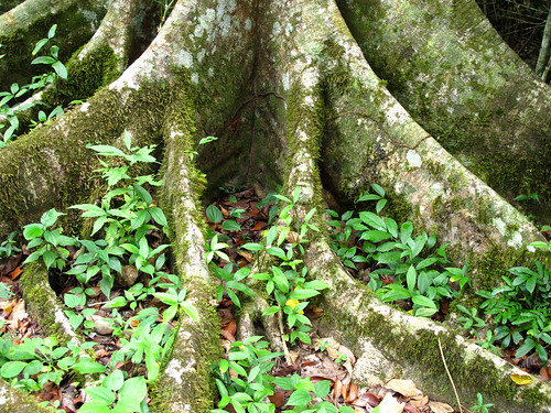 Jungle Roots in Guatemala