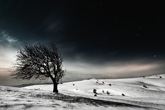 La Rsistance (Cwithe) Tags: winter shadow sky snow cold tree nature fairytale night print stars landscape photography star photo long exposure photographer wind magic dream fairy slovenia 400 midnight moonlight tale comments resistance mitja kobal cwithe vremscica labsofperception mitjakobal miasbest redmatrix viharnik fleursetpaysages fotohikari truthandillusion