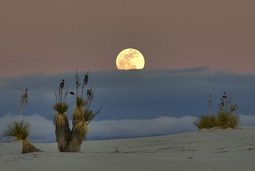[フリー画像] 自然・風景, 月, 雲, 砂漠, アメリカ合衆国, 201009231900