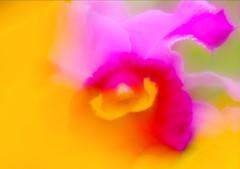 Cattleya (h orihashi) Tags: flower macro nature japan pentax 日本 softfocus 花 inspire soe 広島 k7 naturesfinest blueribbonwinner supershot flickrsbest bej ソフト fineartphotos impressedbeauty diamondclassphotographer flickrdiamond citrit rubyphotographer damniwishidtakenthat pentaxk7