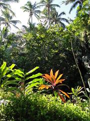 DSC00300 (JFCToronto) Tags: hawaii kapalua sbschampionship