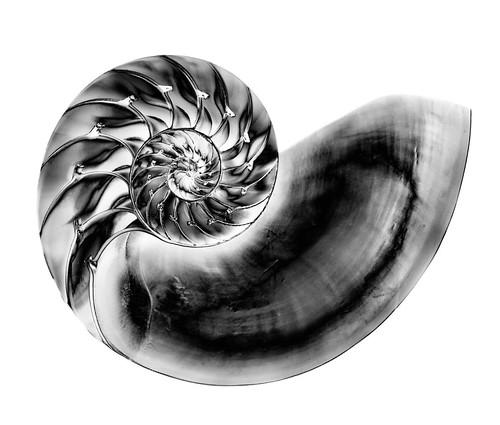 Nautilus Solarization