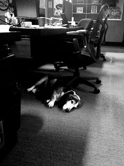 Bacon can't take the raw excitement of the Slide office