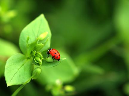 60_365 Lady bug