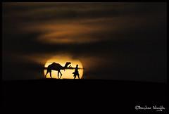 Sailing Through the Desert of Gold ! (Bashar Shglila) Tags: life sunset classic sahara sand desert dunes explore camel libya tuareg ghadames الصحراء صحراء مها ليبيا explored ابل ري الليبية ghadamis غدامس طوارق توارق الطوارق تارقي التوارق mygearandmepremium ايموهاغ الهقار