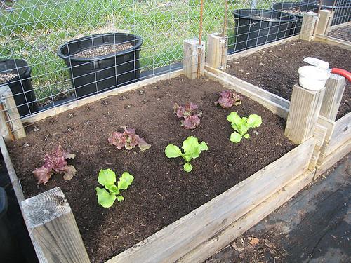 Vegetable Garden 2010 #1