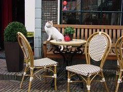 Café Cat [Day 71/365] (indigo_jones) Tags: street red white holland brick window netherlands café cat bench table geotagged outdoors kat utrecht candle chairs nederland doorway planter rood wit olivier tafel stoelen geo:lat=52090737 geo:lon=511587