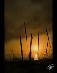 The end (Moments by Xag) Tags: sunset sea espaa sun sol beach grass clouds contraluz mar seagull playa nubes cadiz gaviota ocaso thebeatles hierba xag ltytrx5 20tfcontraluz