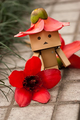 Do you want a hat? (Ali Tse) Tags: flower toy toys amazon withered limited  cottontree danbo bombaxceiba revoltech jfigure danboard  woodcotton