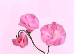 """""""Oh Sweet Pea, won't you be my girl"""" (eyewrisz) Tags: digitalart visualart sweetpeaflower pinksweetpea inkflowers comouterpaintedflowers"""