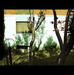 BACK YARD (Elena Fedeli) Tags: italy rome roma building window lamp backyard italia retro finestra palazzo lampione tapparella peachtrees canong10 alberidipesco