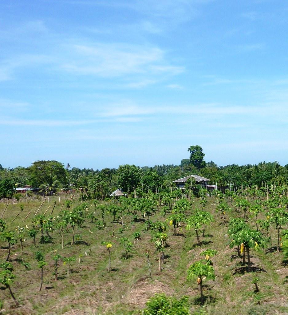Mindanao-Butuan-Cagayan (43)