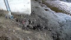 台61七股至馬沙溝之間的高架橋下,土地上盡是爐碴,沖刷入水,比比皆是,決不是公部門說的那麼一點點。晁瑞光攝