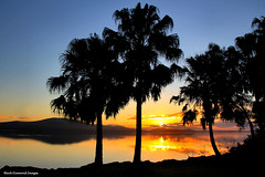 Sunset Over Wallis Lake - Tiona, Pacific Palms (Black Diamond Images) Tags: sunset sunsets australia greatlakes nsw forster palmsunset wallislake beautifulearth arecaceae bdi pacificpalms livistonaaustralis tiona midnorthcoast cabbagepalm cabbagepalms australiansunsets forsternsw greatlakestourism tionasunset pacificpalmsnsw