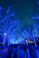 20170107-DS7_1806.jpg (d3_plus) Tags: a05 wideangle d700 thesedays ライトアップ 日常 architecturalstructure 晴れ lighting lightdisplay 建築物 路上 nightshot ストリート 自然 庭園 景色 東京 building 風景 street sky park 花 夜景 nightview ニコン streetphoto illumination 空 dailyphoto nikon architectural tamronspaf1735mmf284dild plant flower daily garden nikond700 路上写真 tamron1735 植物 fine 広角 tokyo tamronspaf1735mmf284dildasphericalif scenery 超広角 nature superwideangle tamronspaf1735mmf284dildaspherical tamronspaf1735mmf284 公園 日本 bloom fineday イルミネーション japan