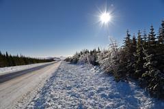 Trees Of Silver (Zircon_215) Tags: silverthaw ice trees route480 burgeohighway westernnewfoundland snow icytrees lensflare niribu fakeniribu winter nikond810