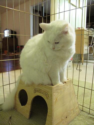 Nilla on Oreo's castle!