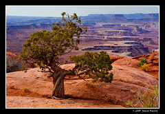Lone Tree at the Green River Overlook (James Neeley) Tags: landscape utah canyonlandsnationalpark hdr islandinthesky 5xp greenriveroverlook jamesneeley