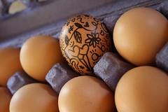 eccentricity (amy  jandreau) Tags: eggs sharpie eggcarton individuality eccentricity