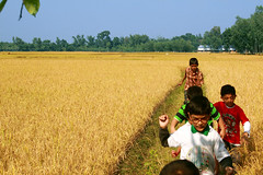 Kids are walking through a paddy field nearby Modhupur forest