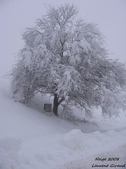 Photo de la Neige au Pays de la Chaise Dieu. (combraille) Tags: france neige 2008 arbre auvergne 43 hauteloire wonderfulworld enneig abigfave chaisedieu platinumphoto livradois concordians arbreneige livradoisforez neige2008 paysdelachaisedieu
