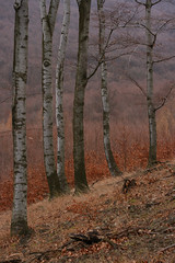 Last days before the snow (sonofsteppe) Tags: life autumn trees winter brown mountain mountains detail fall nature forest woodland walking outdoors daylight still stem woods flora scenery hungary branch tour silent natural forestry seasonal gray peaceful atmosphere dry hike foliage explore earthy area vegetation environment mountainside 60mm deciduous exploration tones region roam impression climate tranquil autumnal sylvan beech fragment bough wooded versant bole temperate milieu brzsny sonofsteppe pusztafia vrsk