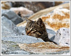 A que no me veis... (celicom) Tags: naturaleza animal gato piedra