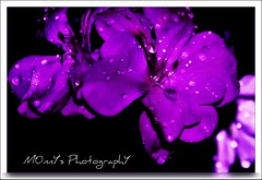 Decadence (LaDy.X) Tags: flower macro drops nikon erotic searchthebest desire passion seduction decadence flowerotica artofimages bestcapturesaoi