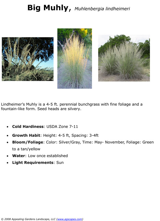 Big Muhly.jpg