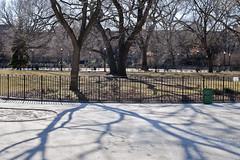 -- (felix.castor) Tags: nyc winter fence shadows ev february monday tsp sunnyday 020810 tompkinssq sometrees nycsky