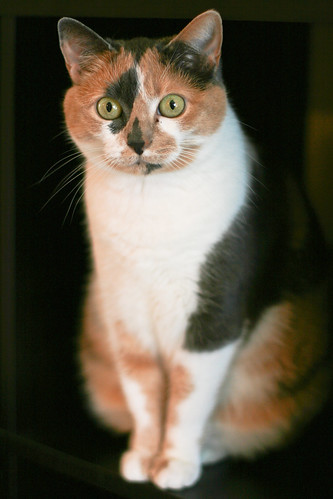 Meow-Meow!