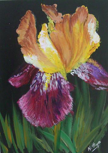 Iris #20