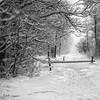 winter view (GdeB fotografeert) Tags: vakantie drenthe borger ees boswandeling blackwhitephotos landvanbartje wintersbeeld gdebfotografeert mygearandme mygearandmepremium januari2010