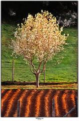 Udaberria (Jabi Artaraz) Tags: light primavera luz beautiful landscape spain europa europe sony flor paisaje bilbao vida rbol zb bilbo spanien baskenland biskaia udaberria naturesfinest beautifulearth biskaya euskoflickr fineartphotos abigfave basquelandscape superaplus aplusphoto flickrbest impressedbeauy diamondclassphotographer flickrdiamond excapture paisajevasco jartaraz bderechosdeautorauthorscopyrightbjabiartaraz bestofblinkwinners blinksuperstars