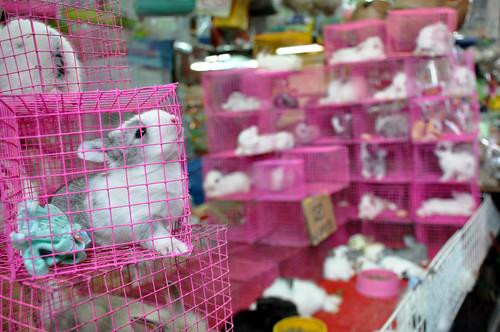 Bunniesintinycages