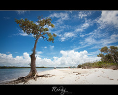 Summer days (Reedy Photography) Tags: houseboat bluesky stradbrokeisland canon1022mm mangrovetree nonhdr canon7d reedyphotography